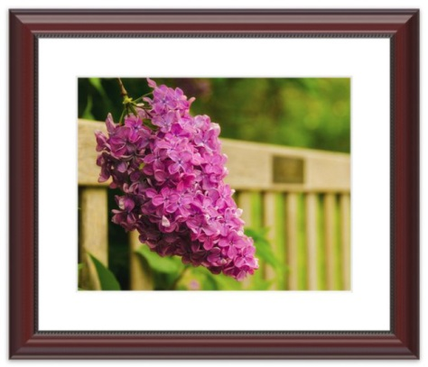 Framed Nature Photograph by Melissa Fague from PI Photography and Fine Art - Delaware Photographer